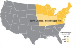 once a tick is attached and feeds on you for at least 72 hours the little s can transmit these diseases most symptoms that you will encounter are